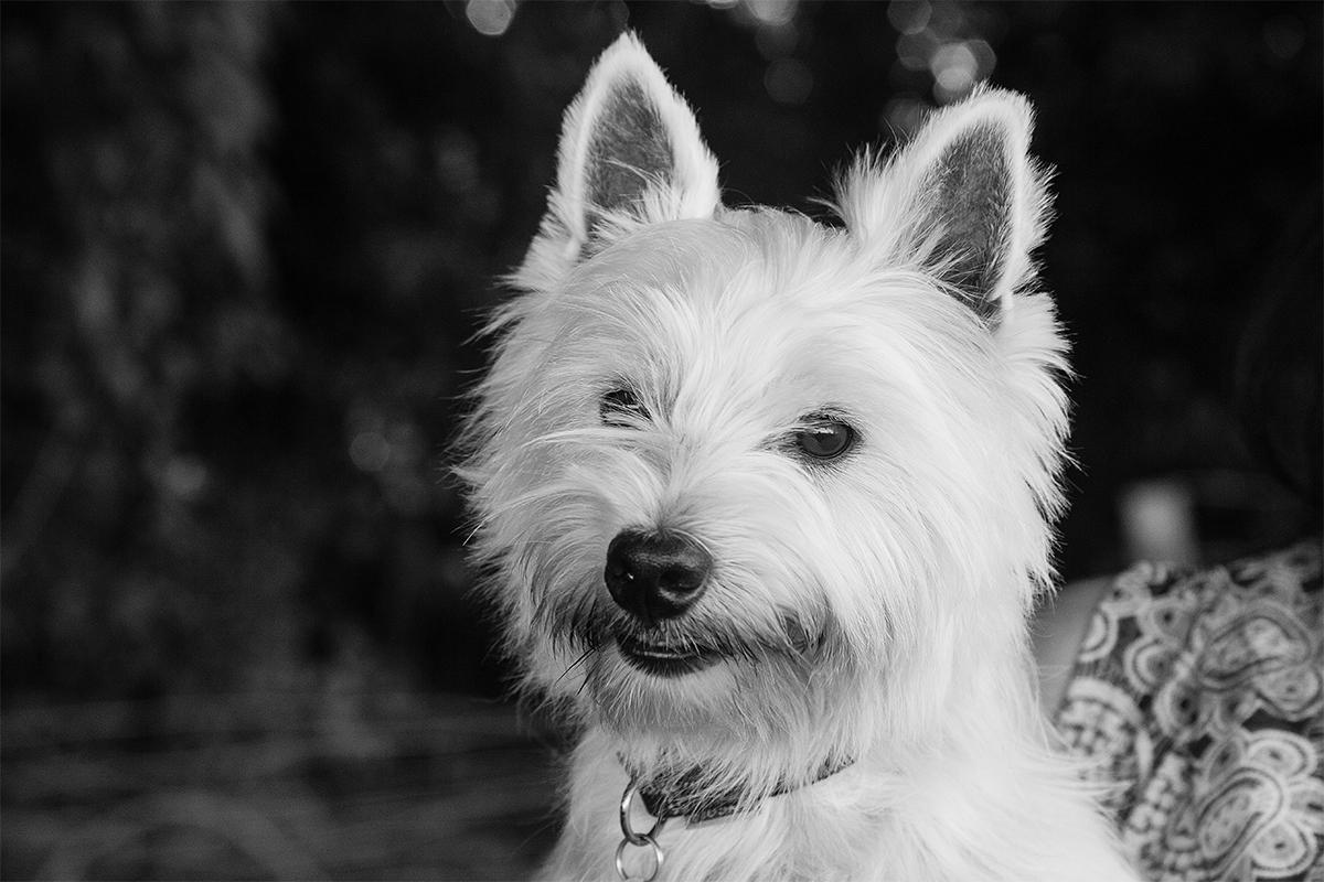 Monmouth Pet Photographer