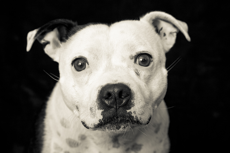 PET PHOTOGRAPHER GLOUCESTER AND HEREFORD