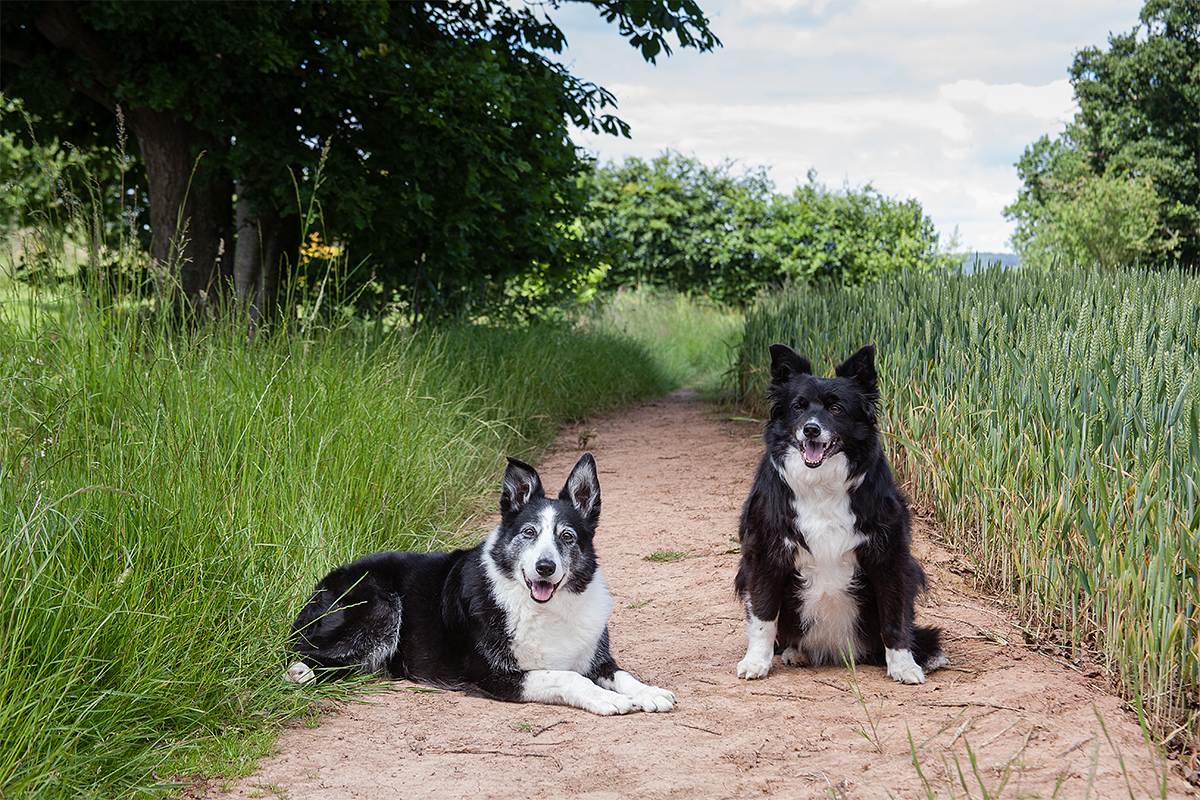 Hereford Pet Photographer